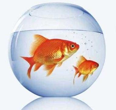 به ماهی قرمز عید دست نزنید