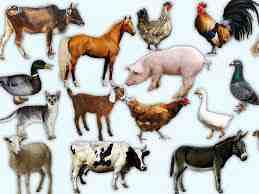 تحقیق معرفی حیوانات اهلی