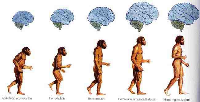 مراحل رشد انسان چیست