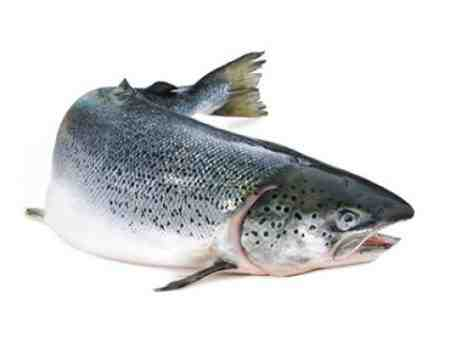 طرح کارآفرینی پرورش ماهی قزل آلا