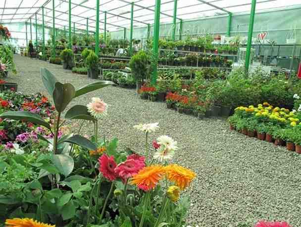 تحقیق دانش آموزی در مورد گل و گیاه