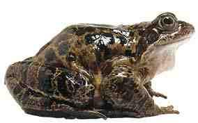 تحقیق فرق بین وزغ و قورباغه