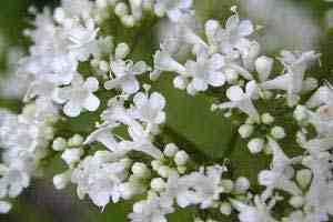 مقاله تنش در گیاهان