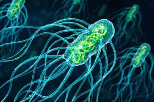 انواع میکروارگانیزم ها و باکتری ها