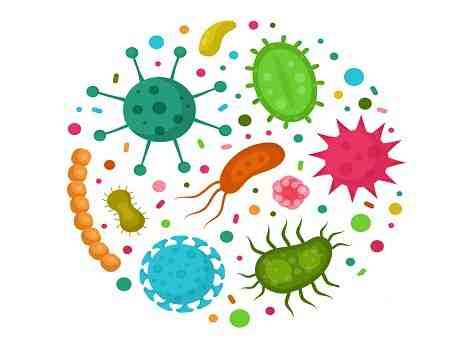 زیست شناسی میکروارگانیسم ها