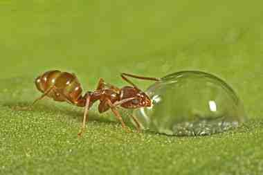 تحقیق در مورد مورچه ها