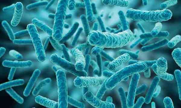میکروارگانیسم های مواد غذایی