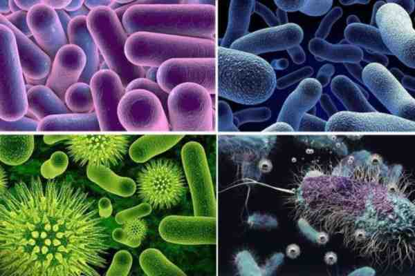 میکروارگانیسم های موجود در خاک