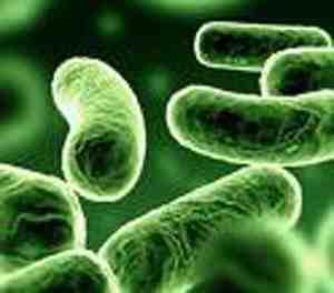 دانلود تحقیق میکروبیولوژی