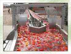 طرح توجیهی کارخانه رب گوجه فرنگی
