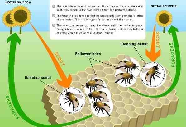 پاورپوینت پیاده سازی موازی الگوریتم زنبور عسل بر روی GPU