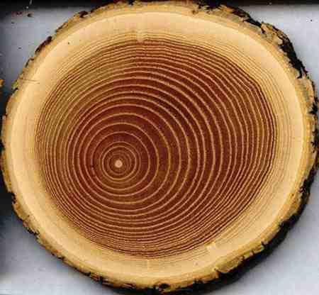 مقاله کامل درباره چوب