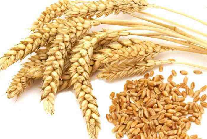 بررسی و مقایسه کشت مکانیزه و سنتی بر روی عملکرد گندم سرداری در شرایط دیمزار