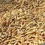 پاورپوینت کنترل و گواهی بذر