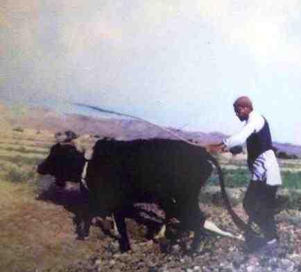 مقاله جامعه شناسی روستایی