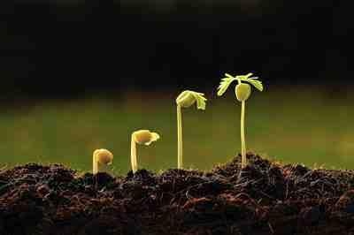 مقاله رشد و نمو گیاهان