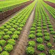 پاورپوینت کشاورزی ارگانیک
