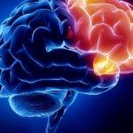 مقاله درباره مغز و اعصاب